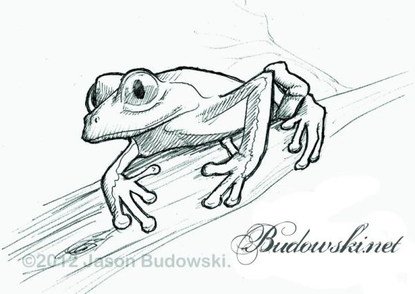 2011 10 18 rainforest frog