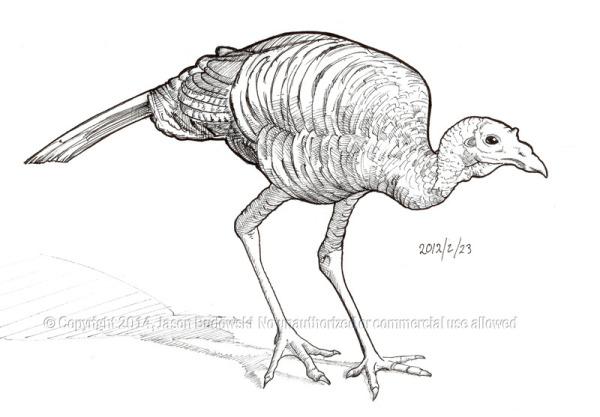 2012 02 23 turkey w2000