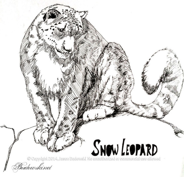 2014 04 01 snow leopard inked a (1) 900w
