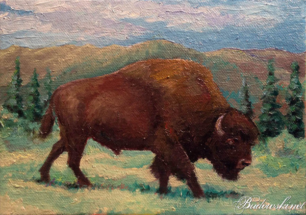 American Buffalo Oil Painting