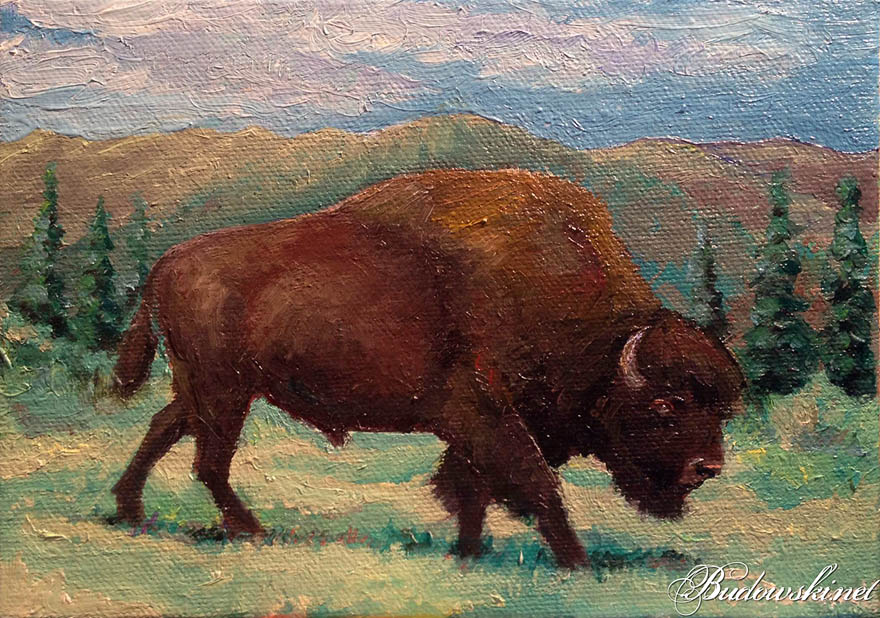 American Buffalo oil painting - Fine Art & Illustration Fine Art ... Pencil Drawing Pictures Of Flowers